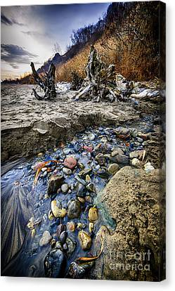 Beach Brook At Scarborough Bluffs Canvas Print by Elena Elisseeva