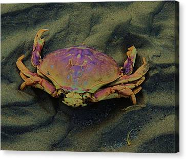 Beach Crab Canvas Print by Helen Carson