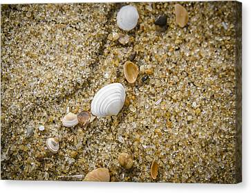 Beach Debris Canvas Print by Bradley Clay