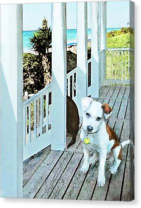 Beach Dog 1 Canvas Print by Jane Schnetlage