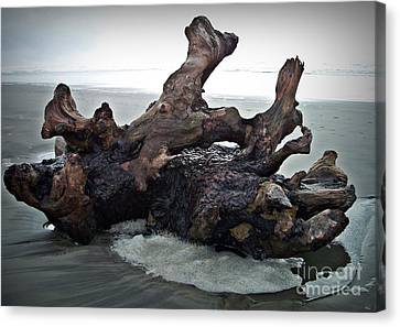 Beach Driftwood In Color Canvas Print