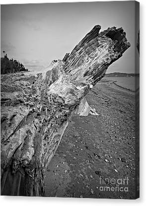 Beach Driftwood View Canvas Print