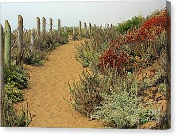 Canvas Print featuring the photograph Beach Dune  by Kate Brown