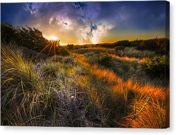 Beach Dunes Canvas Print by Debra and Dave Vanderlaan