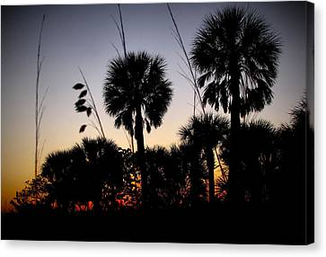 Beach Foliage At Sunset Canvas Print by Phil Penne