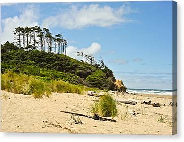 Beach Forest Canvas Print by Crystal Hoeveler