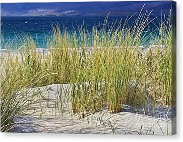Beach Gras Canvas Print by Juergen Klust