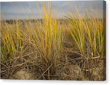 Beach Grass Canvas Print by Allan Morrison
