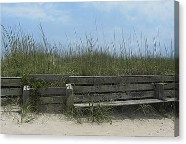 Beach Grass And Bench  Canvas Print by Cathy Lindsey