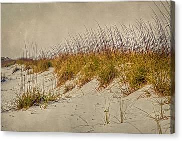 Beach Grass And Sugar Sand Canvas Print