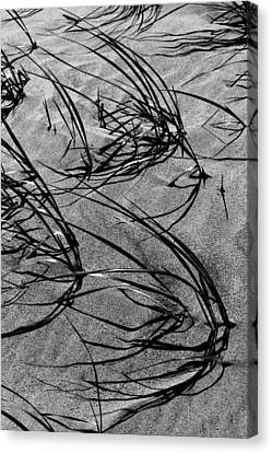 Beach Grass Black And White Canvas Print by Mary Bedy