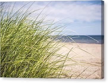 Beach Grass Canvas Print by Elena Elisseeva