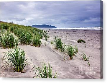 Beach Grass Canvas Print by Robert Bales