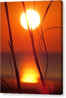 Beach Grass Sunrise Canvas Print