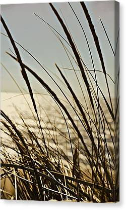 Autumn Canvas Print - Beach Grazing by Dawdy Imagery