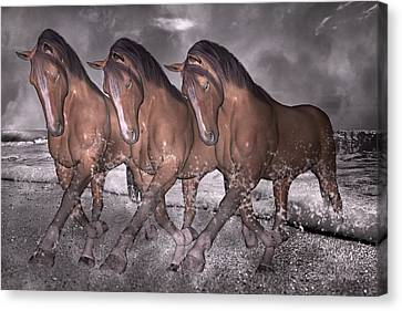 Beach Horse Trio Night March Canvas Print