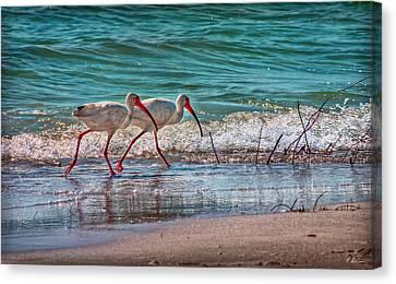 Beach Jogging In Twos Canvas Print