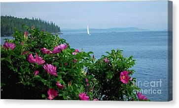 Beach Roses Canvas Print by Christopher Mace
