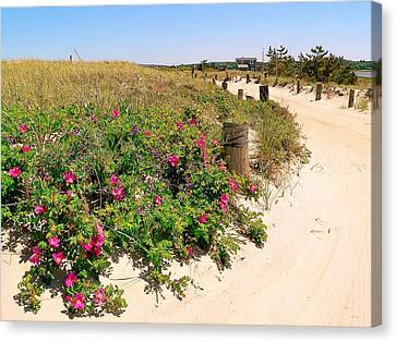Canvas Print featuring the photograph Beach Roses by Janice Drew