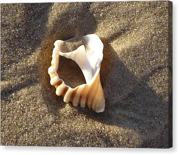 Beach Shell Canvas Print by David Yack