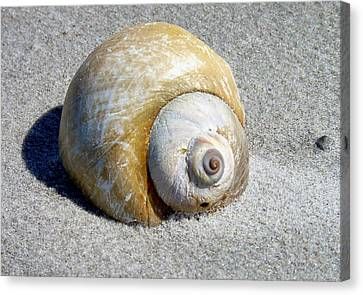 Canvas Print featuring the photograph Beach Shell by Janice Drew