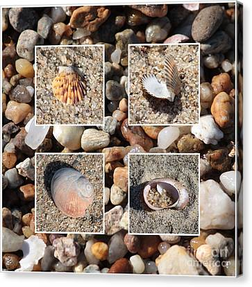 Beach Shells And Rocks Collage Canvas Print by Carol Groenen