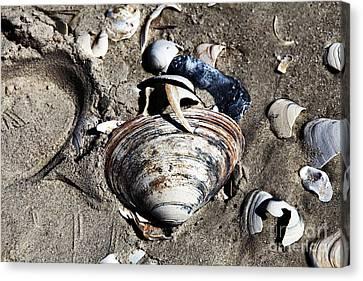 Beach Shells Canvas Print by John Rizzuto
