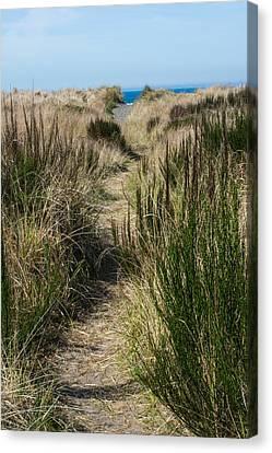 Beach Trail Canvas Print