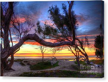 Beach Tree Sunset View Canvas Print