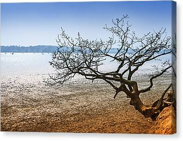 Beach Tree Canvas Print by Svetlana Sewell