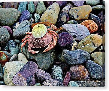 Beach Wares - Egghead Crab Canvas Print