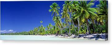 Beach With Palm Trees, Bora Bora, Tahiti Canvas Print
