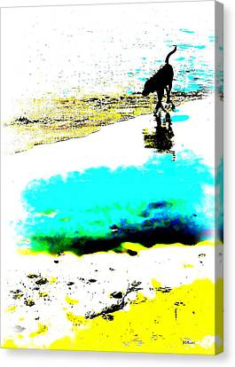 Beachcomber Canvas Print by Brian D Meredith