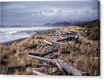 Beached Driftlogs Canvas Print
