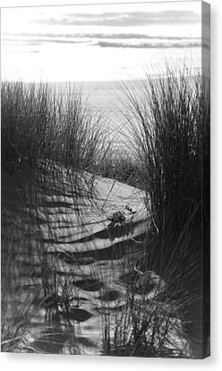 Canvas Print featuring the photograph Beachgrass by Adria Trail