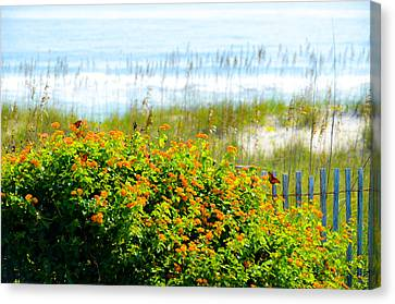Beachy Butterflies  Canvas Print
