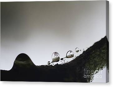 Beads Of Rain With Particles Floating Canvas Print by Dan Friend