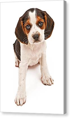Beagle Mix Puppy With Sad Look Canvas Print by Susan Schmitz