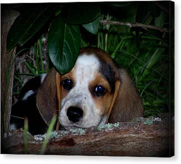 Beagle Puppy Canvas Print by Lynn Griffin