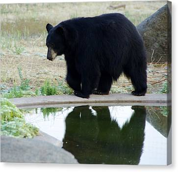 Bear 2 Canvas Print