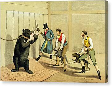 Bear Baiting Canvas Print by Henry Thomas Alken