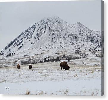 Bear Butte Buffalo Canvas Print