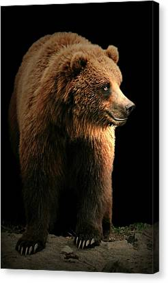Bear Essentials Canvas Print by Diana Angstadt
