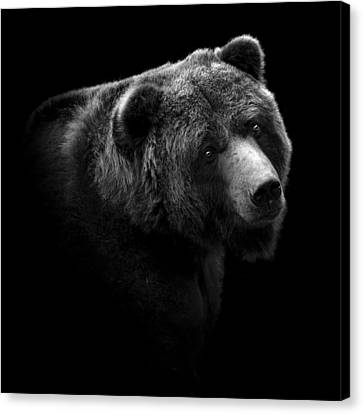 Portrait Of Bear In Black And White Canvas Print