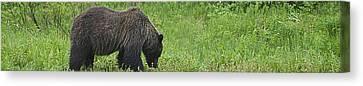 Bear Necessities  Canvas Print by Travis Crockart