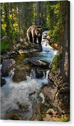 Bear Necessity Canvas Print