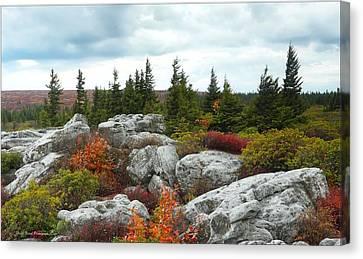 Bear Rocks Canvas Print