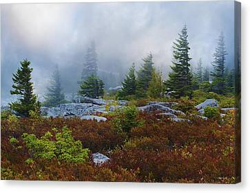 Bear Rocks Canvas Print by Ron Jones