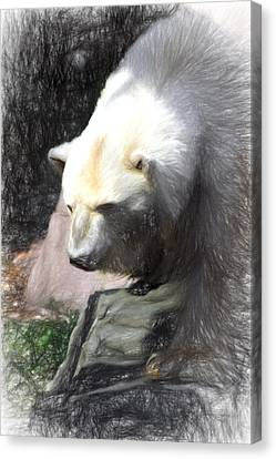 Canvas Print featuring the digital art Bear Visions by Terry Cork