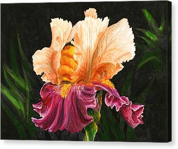 Bearded Iris Canvas Print by Karen Wright